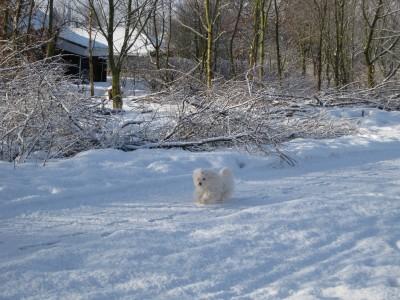 Mulan i sne
