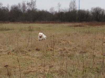 Paya marken i løb